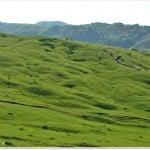 Superficial landslide, quai-stabilised, Subc. Buzau (MMicu)