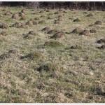 Hummocks (N. Cruceru)