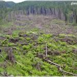Zarna, deforestation, Mas.Fagaras (S Simoni)
