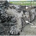 Subfossil trunk, Tupilati Raul Moldova (NRadoane)