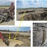 Busteni subfosili in balastiere, r. Moldova (Radoane et al)