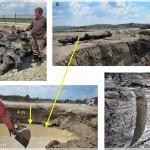 Subfossil trunk , R. Moldova (Radoane et al)